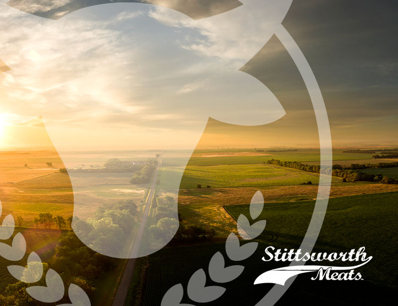 Stittsworth Meats Case Study